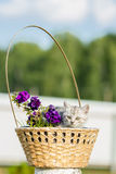 Pequeño gatito mullido que se sienta en una cesta Imágenes de archivo libres de regalías