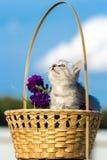 Pequeño gatito mullido que se sienta en una cesta Fotos de archivo