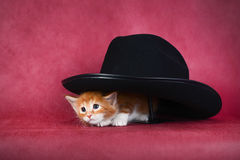 Pequeño gatito pelirrojo que mira a escondidas hacia fuera de debajo el sombrero foto de archivo