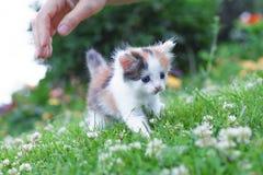 Pequeño gatito que camina en la hierba en el verano del parque Fotografía de archivo