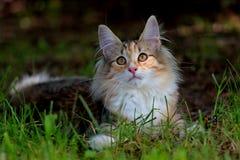 Pequeño gatito que descansa en jardín Fotos de archivo