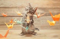 Pequeño gatito que juega con los pájaros coloridos de la papiroflexia imagen de archivo libre de regalías