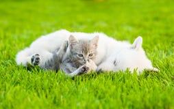 Pequeño gatito que miente con el perrito soñoliento en hierba verde foto de archivo