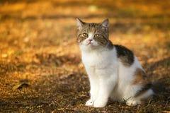 Pequeño gatito que mira en hierba Imágenes de archivo libres de regalías