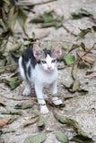 Pequeño gatito que se coloca en el piso Fotos de archivo