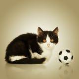 Pequeño gatito que se sienta con una bola del fútbol imagen de archivo