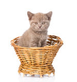 Pequeño gatito que se sienta en cesta En el fondo blanco Imagenes de archivo