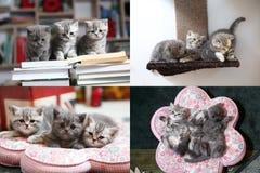 Pequeño gatito que se sienta en un libro, multicam, rejilla 2x2 Fotos de archivo libres de regalías