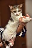 Pequeño gatito rayado con un blanco Fotografía de archivo libre de regalías