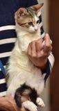 Pequeño gatito rayado con un blanco Imagenes de archivo