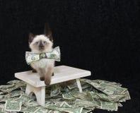 Pequeño gatito rico fotos de archivo libres de regalías