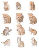 Pequeño gatito rojo del fondo Foto de archivo libre de regalías