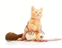 Pequeño gatito rojo lindo que juega con las bolas del hilado y que mira derecho la cámara Fotos de archivo