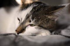 Pequeño gatito soñoliento fotografía de archivo libre de regalías