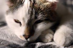 Pequeño gatito soñoliento fotos de archivo