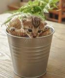 Pequeño gatito soñoliento en el cubo Foto de archivo