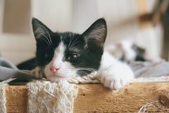 Pequeño gatito soñoliento lindo, primer foto de archivo