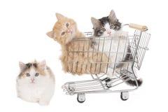 Pequeño gatito tres en un baket de las compras imagen de archivo libre de regalías