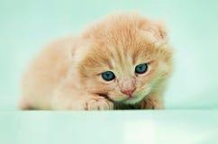 Pequeño gatito triste imágenes de archivo libres de regalías