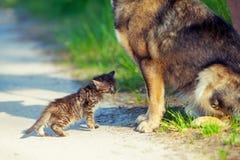 Pequeño gatito y perro grande Foto de archivo