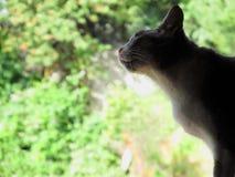 Pequeño gato Imagenes de archivo