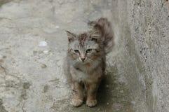 Pequeño gato Imagen de archivo libre de regalías