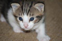 Pequeño gato Fotos de archivo