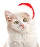 Pequeño gato con el sombrero de Sanas Fotos de archivo