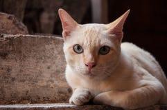 Pequeño gato con la piel suave Imagen de archivo libre de regalías