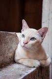 Pequeño gato con la piel suave Foto de archivo libre de regalías