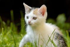 Pequeño gato con los ojos hermosos Imágenes de archivo libres de regalías