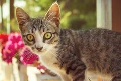 Pequeño gato con los ojos verdes hermosos Fotos de archivo libres de regalías