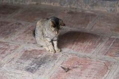 Pequeño gato de tigre que se sienta observando su presa grande de la polilla foto de archivo libre de regalías