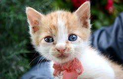 Pequeño gato del bebé Foto de archivo libre de regalías
