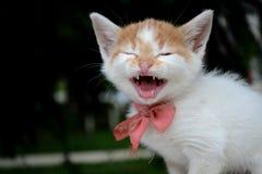 Pequeño gato del bebé Imágenes de archivo libres de regalías