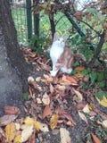 Pequeño gato dulce Foto de archivo libre de regalías