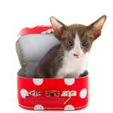 Pequeño gato en maleta roja fotografía de archivo libre de regalías