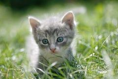 Pequeño gato en una hierba verde Imagen de archivo libre de regalías