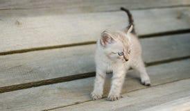 Pequeño gato gris, jugando en la yarda, en el fondo de madera, Fotos de archivo