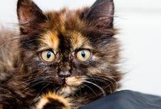Pequeño gato hermoso que le mira fotos de archivo