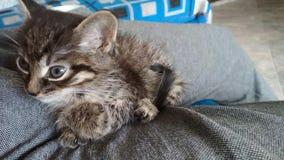 Pequeño gato lindo almacen de video