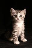 Pequeño gato lindo Fotos de archivo libres de regalías