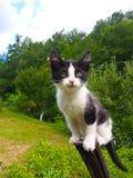 Pequeño gato lindo Foto de archivo