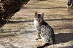 Pequeño gato lindo Fotografía de archivo libre de regalías