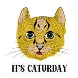 Pequeño gato lindo con las barbas largas Ilustración del vector en el fondo blanco Él ` s Caturday Foto de archivo libre de regalías