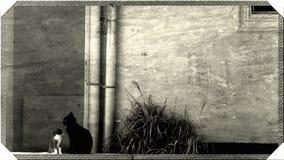 Pequeño gato lindo y gato grande junto Imágenes de archivo libres de regalías