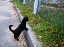Pequeño gato negro Foto de archivo libre de regalías