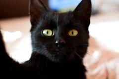 Pequeño gato negro con los ojos verdes que hacen el selfie en el smartohone fotos de archivo