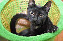 Pequeño gato negro lindo Imagen de archivo libre de regalías