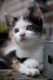 Pequeño gato, ojos grandes Fotografía de archivo